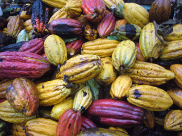 Le bon cacao, une denrée rare?