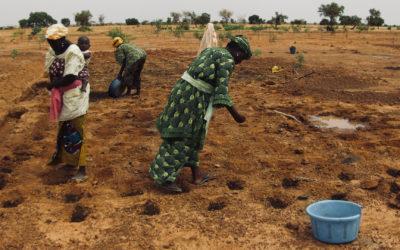 L'agriculture de conservation pour redonner vie et fertilité dans les régions sub-sahariennes : L'action de Jéthro